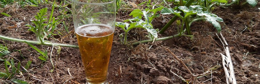 Photo of a glass of beer sitting amongst a garden