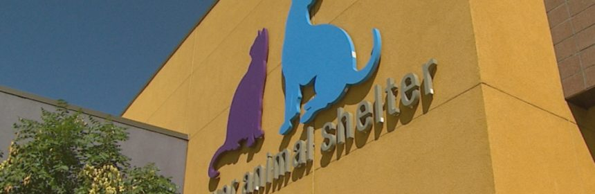 A perspective shot of the logo of the Denver Animal Shelter on their building.